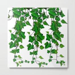 TRAILING VERDANT GREEN IVY LEAVES & VINES ON WHITE Metal Print