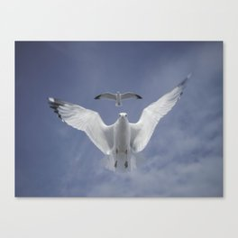Seagull {Seven} Canvas Print