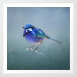Blue Fairy Wren Art Print