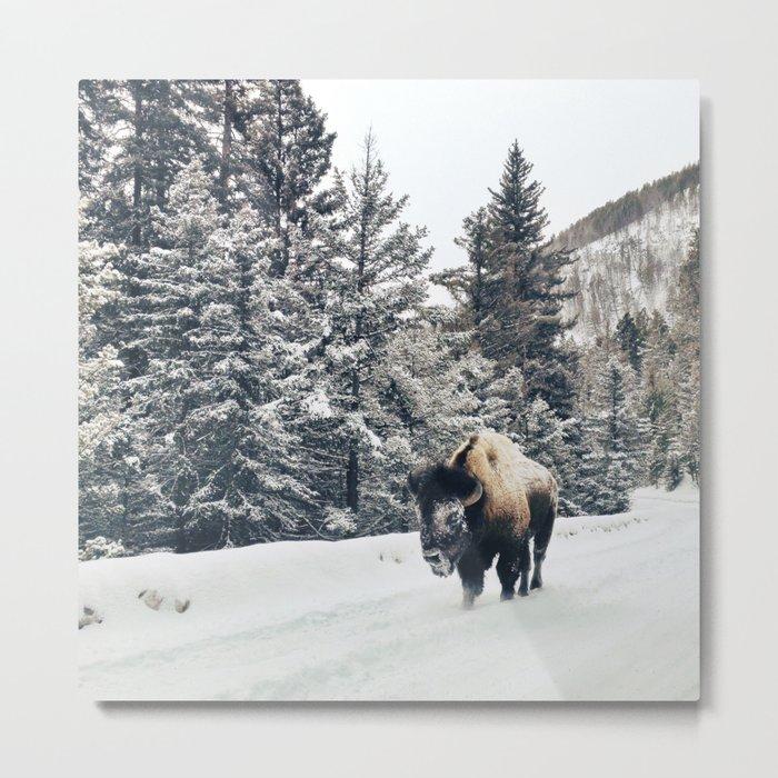 Frosty Bison Metal Print