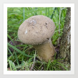 Pestle puffball fungus Art Print
