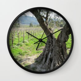 Olive tree in vineyard Wall Clock