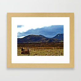 scottish Deer Framed Art Print