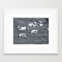 cows Framed Art Prints featuring Cows by Mr & Mrs Quirynen