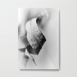 Curled Elegance... (bw) Metal Print