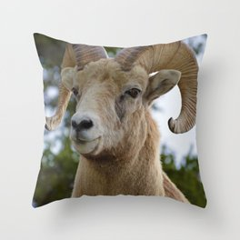 Big Horn Sheep in Jasper National Park Throw Pillow