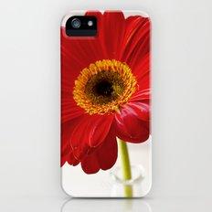 red gerbera Slim Case iPhone (5, 5s)