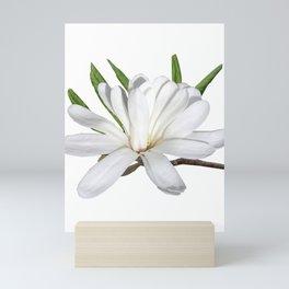 The Flower is the Star (Magnolia) Mini Art Print