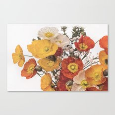 Perfect pastel poppies Canvas Print