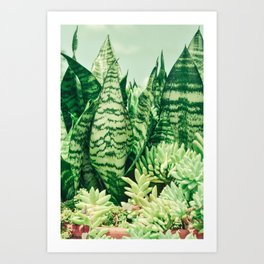 Succulents and Sansevieria Art Print