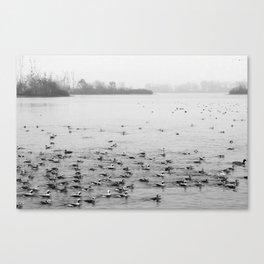 Water Birds in Winter Canvas Print