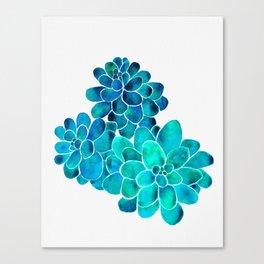 Turquoise succulents Canvas Print