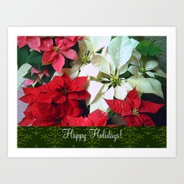 Mixed color Poinsettias 1 Happy Holidays S6F1 Art Print