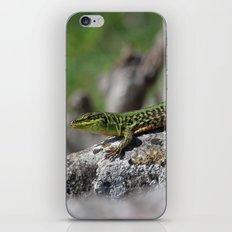 Green Lizard iPhone & iPod Skin