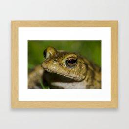 Frog posing Framed Art Print