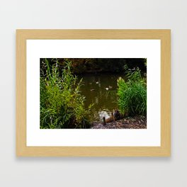 Busted! Cat watches the ducks Framed Art Print