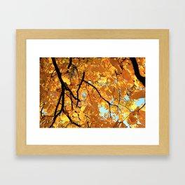Glorious Golden Hickory Framed Art Print