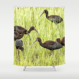 Six White-Faced Ibis in Breeding Plumage Shower Curtain