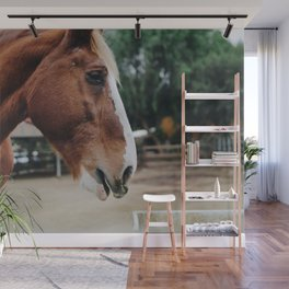 horse by Kelsey Knight Wall Mural