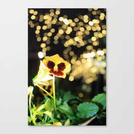 Flower of the Night Canvas Print