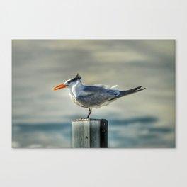 Tern For A Turn Canvas Print