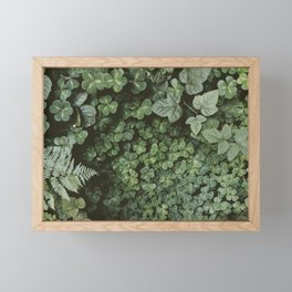 Wood Sorrel Framed Mini Art Print