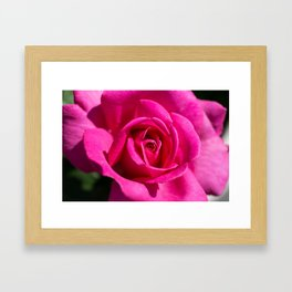 Rose - Pink Framed Art Print