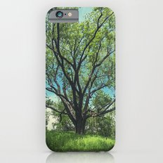 The Swing Tree iPhone 6 Slim Case