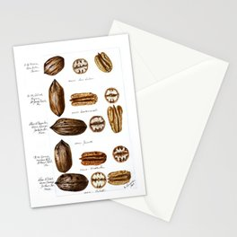 Nuts - Fruit Illustration Stationery Cards