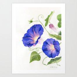Morning Glory Bloom Art Print