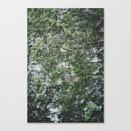 Moss covered tree Canvas Print
