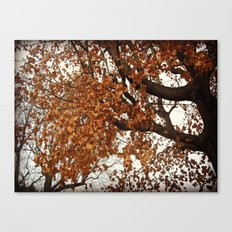 Colors Thriving As The Leaves Are Dying Canvas Print