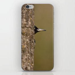 Black woodpecker iPhone Skin