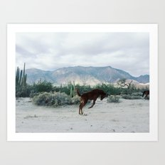 Bucking in Baja Art Print