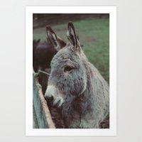 Donkey Joe Art Print