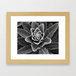 Golden Ratio in a Wild Weed Framed Art Print