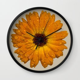 Calendula officinalis Wall Clock