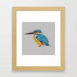 Kingfisher 6 Framed Art Print