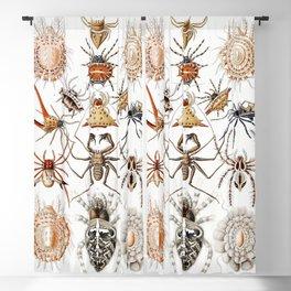 Antique Scientific Spider Biological Animal Illustration  Blackout Curtain