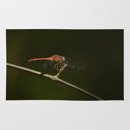 Half-banded Toper (dragonfly) Rug