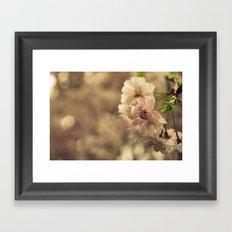 Cherry Blossom Bokeh Framed Art Print
