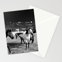 Roaming Mustangs 1 Stationery Cards