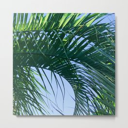 Exquisite, Curling Palm Leaf in Blue Sky Metal Print
