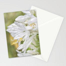 Softly White Stationery Cards