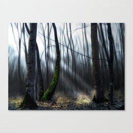 Searching the light Canvas Print