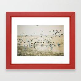 My heart beats in a million gulls Framed Art Print