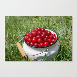 Prunus cerasus sour cherry fruits Canvas Print