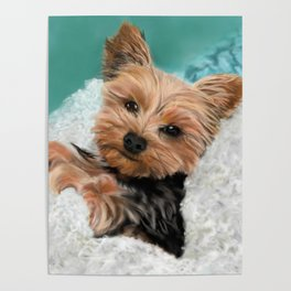 Chewie the Yorkie Poster