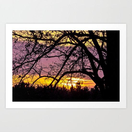 Branches Beholding Beauty Art Print