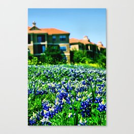Bluebonnets Galore Canvas Print
